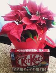Kitkat_rmt02